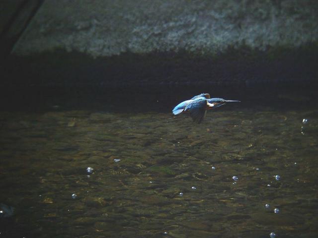 水面を飛ぶ2